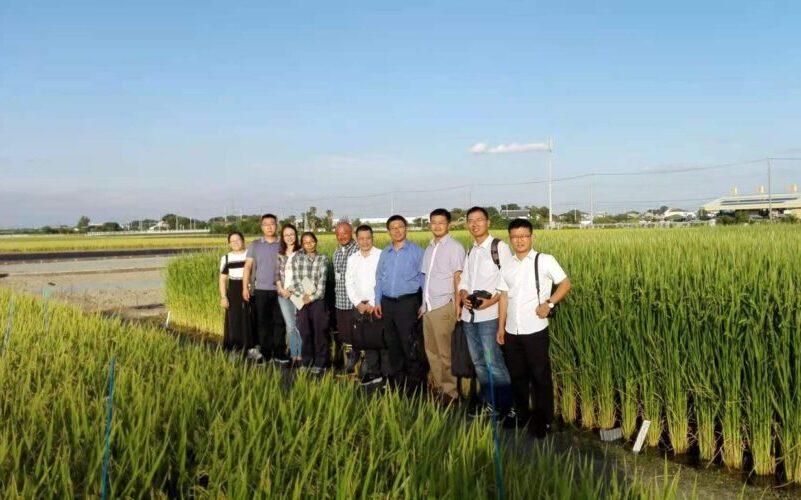 访问视察水稻种植基地